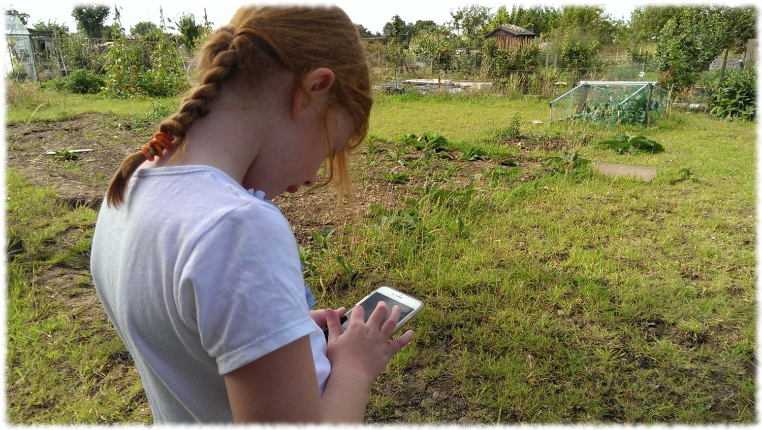 Our vegetable garden planning software is fully functional on phones and tablets