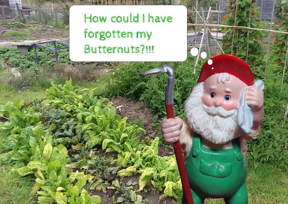 If you manage a vegetable garden or allotment. Now is the time to start planning next year whilst you remember what you missed or what is growing well.