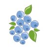 Icon showing Blueberries