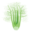Icon showing Florence Fennel