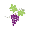 Icon showing Grape Vine - Red