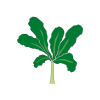 Icon showing Kale