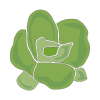 Icon showing Lettuce (Hearting)