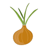 Icon showing Onion (Brown)