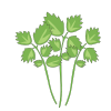 Icon showing Parsley