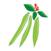 Icon showing Runner Bean