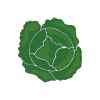 Icon showing Cabbage (winter/savoy)