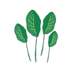 Icon showing Spinach