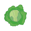 Icon showing Spring Cabbage