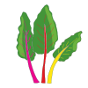 Icon showing Swiss Chard